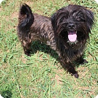 Adopt A Pet :: Milly - Brattleboro, VT