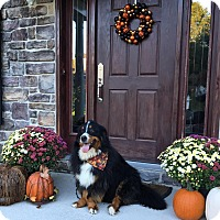 Adopt A Pet :: Claire - Westtown, PA