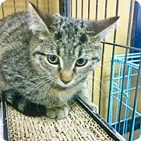 Adopt A Pet :: Kango - Hamilton, ON