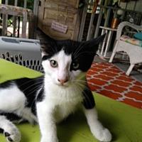Adopt A Pet :: Arnie - Monroe, NC