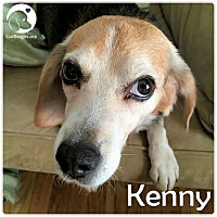 Adopt A Pet :: Kenny - Chicago, IL
