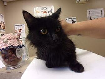 Adopt A Pet :: Alexandrira  - Princeton, WV