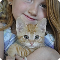 Adopt A Pet :: Rusty - Purrs instantly! - New Smyrna Beach, FL
