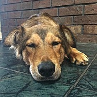 Collie/German Shepherd Dog Mix Dog for adoption in Stafford, Texas - Sally