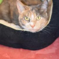 Adopt A Pet :: Kiwi - Bradenton, FL