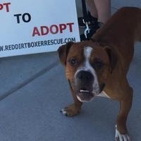 Adopt A Pet :: Clyde II nd - Harrah, OK