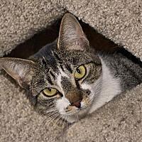 Adopt A Pet :: Babette - Stafford, VA