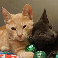 Adopt A Pet :: Buster and Blaze - Sprakers, NY
