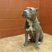 Adopt A Pet :: NALA - Downey, CA