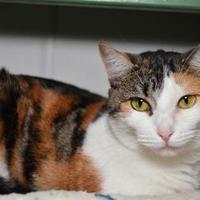 Adopt A Pet :: Sophia - Elkhorn, WI