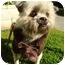 Photo 2 - Shih Tzu Mix Dog for adoption in Los Angeles, California - Jingle