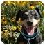 Photo 3 - Miniature Pinscher Mix Dog for adoption in Appleton, Wisconsin - Gretta