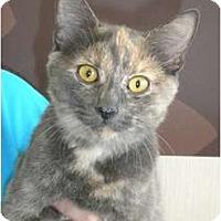Adopt A Pet :: Lisa - Frederick, MD