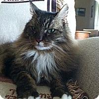 Adopt A Pet :: Felix - Laguna Woods, CA