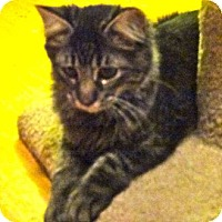 Adopt A Pet :: Isaiah - Escondido, CA