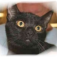 Adopt A Pet :: Gabrielle - Montgomery, IL