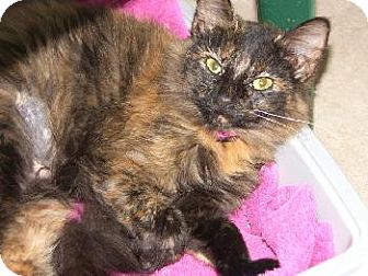 Domestic Mediumhair Cat for adoption in Wetumpka, Alabama - #80225 'Gabby'
