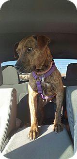 Catahoula Leopard Dog Mix Dog for adoption in Manhattan, Kansas - Aquarius