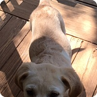 Adopt A Pet :: Chipa - Ball Ground, GA