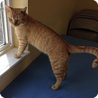 Adopt A Pet :: Maximillian - Larned, KS