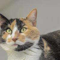 Adopt A Pet :: Kimmi - Crossfield, AB