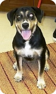 Husky Mix Puppy for adoption in Eastpoint, Florida - Gypsy Rose