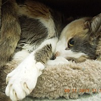 Adopt A Pet :: NELLIE - Newport, OR