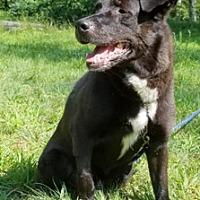 Adopt A Pet :: Hondo - Canterbury, CT