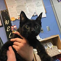 Adopt A Pet :: JOHNNY - Canfield, OH