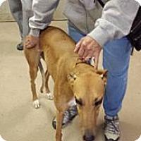Adopt A Pet :: Coach Bridgettee - Knoxville, TN