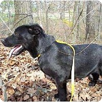 Adopt A Pet :: Edwin (reduce fee) - Allentown, PA