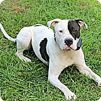 Adopt A Pet :: Petey*Professionally Trained* - Roaring Spring, PA