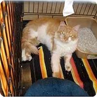 Adopt A Pet :: Bobby Butterscotch - Jacksonville, FL