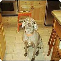 Adopt A Pet :: Willie - Attica, NY