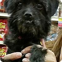 Adopt A Pet :: Dinky - 7lb little ball of fun - Phoenix, AZ