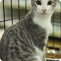 Adopt A Pet :: Stuart - Sacramento, CA