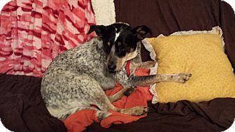Blue Heeler Mix Dog for adoption in Manhattan, Kansas - Lucy