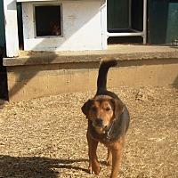 Adopt A Pet :: Rocky - Columbia, KY
