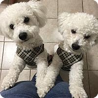 Adopt A Pet :: THOR - East Hanover, NJ
