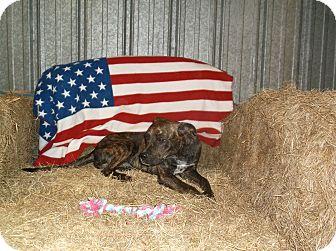 Boxer Mix Dog for adoption in Arkadelphia, Arkansas - Cooper