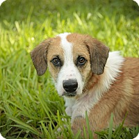 Adopt A Pet :: Jack - Davie, FL