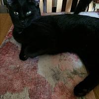 Adopt A Pet :: Jimmy - Clay, NY