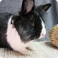 Adopt A Pet :: Carlton - Newport, DE