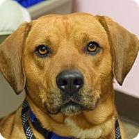 Adopt A Pet :: Lucky - Negaunee, MI