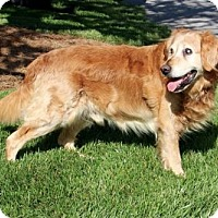 Adopt A Pet :: GRATEFUL GRANT - Brattleboro, VT