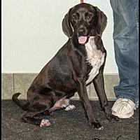 Adopt A Pet :: Ruckus - Ada, OK