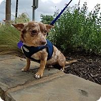 Adopt A Pet :: Harlow - Hamilton, ON