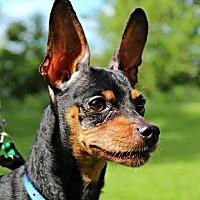 Adopt A Pet :: Snoopy - Dillsburg, PA