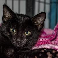 Adopt A Pet :: Oil - Binghamton, NY