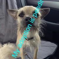 Adopt A Pet :: Buzz - Boonville, MO